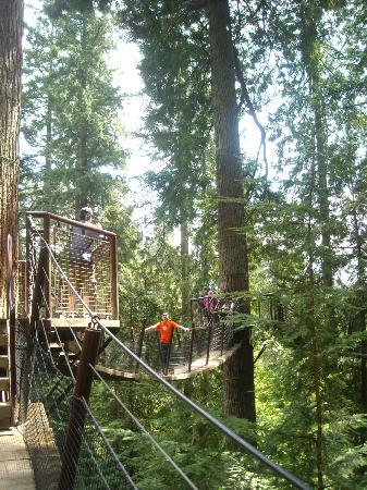 Capilano Suspension Köprüsü ve Parkı: The Treetops Adventure