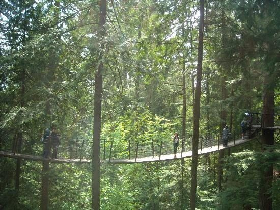 Capilano Suspension Bridge Park: Treetops