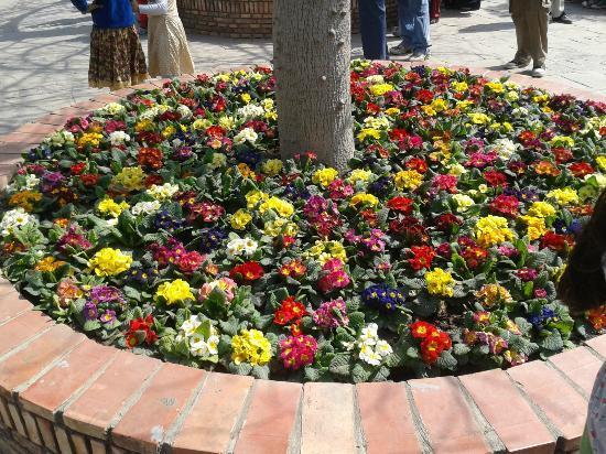 Garden of Five Senses: Flower beds