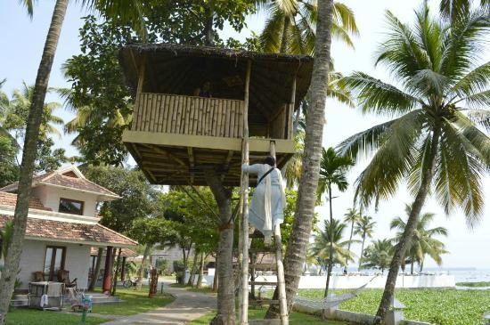 The World Backwaters: Tree House
