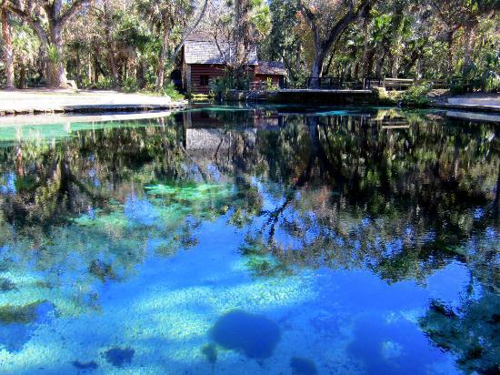 Juniper Springs Recreation Area: Swimming Hole