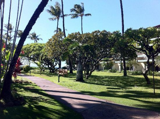 Kaanapali Beach Hotel: Hotel grounds