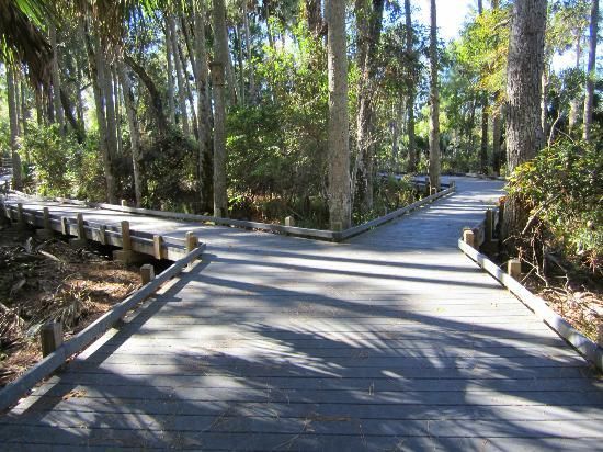 Juniper Springs Recreation Area: Boardwalk