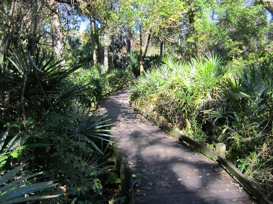 Juniper Springs Recreation Area: Trail