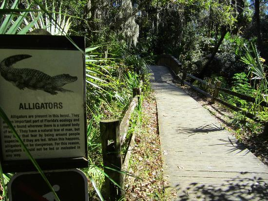 Juniper Springs Recreation Area: Trail