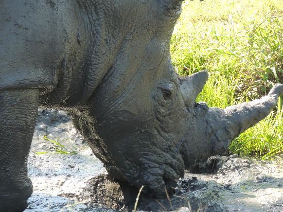 Gomo Gomo Game Lodge: Rhino