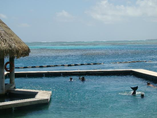 InterContinental Moorea Resort & Spa: Centro de golfinhos