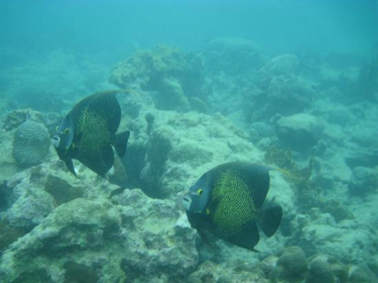 Dimples Apartments : Angel fish off store bay