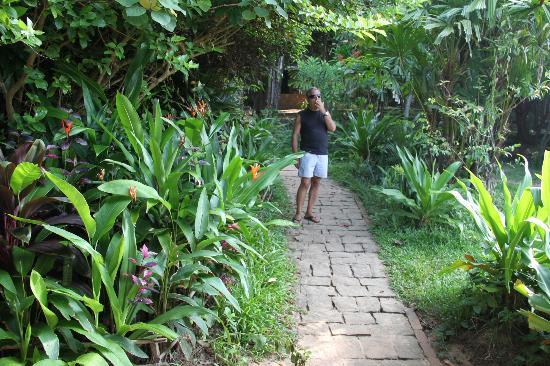 Giardino tropicale foto di mango bay resort isola di - Giardino tropicale ...