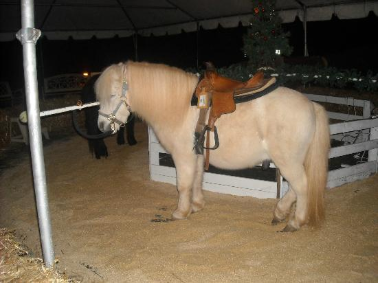 Legacy Lodge: Christmas village pony ride