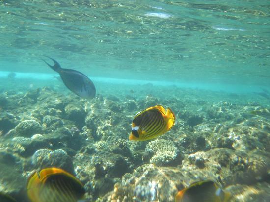 Tamra Beach: i pesci