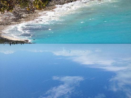 Coral Gardens : Exuma