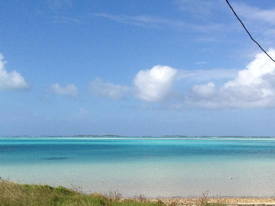 Coral Gardens : Nuances de bleu