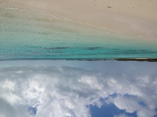 Coral Gardens : Sur stocking island