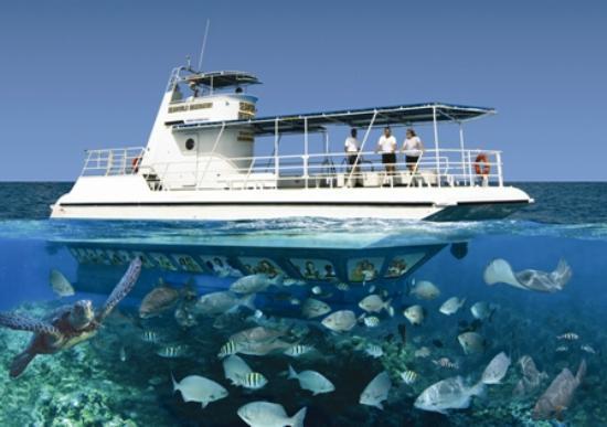 Seaworld Observatory