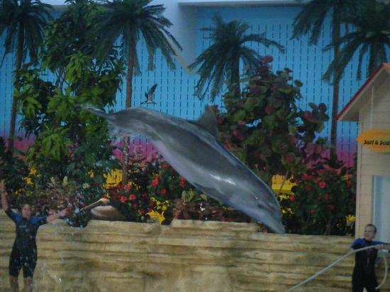 Brookfield Zoo: Dolphin Show