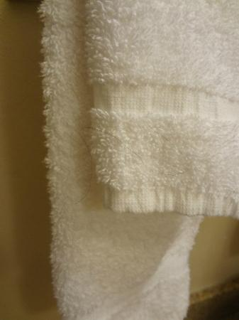 Baymont Inn & Suites Memphis East : towel