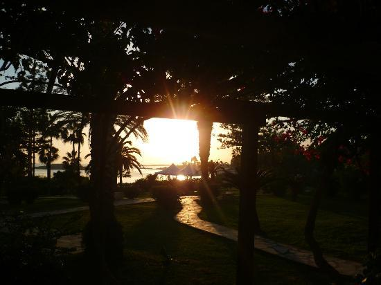 Nissi Beach Resort: Beautiful gardens= perfect sunset