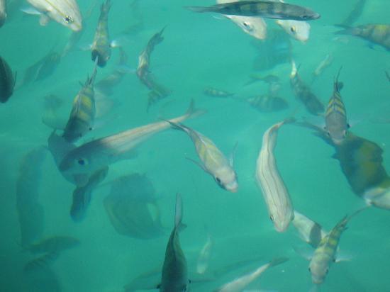 Pousada Jamanta: snorkel en Botinhas