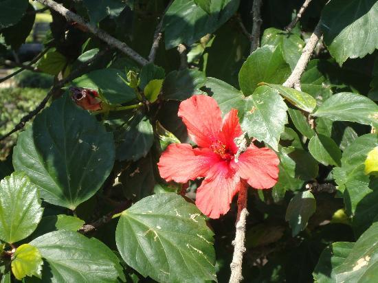 La Casa del Molinero: fleur du jardin