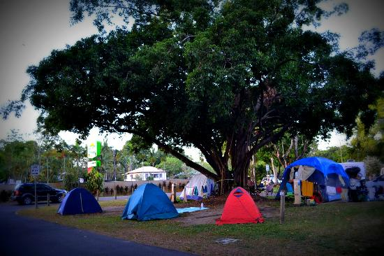 Cairns Holiday Park: Our favourite campsite under a fig tree