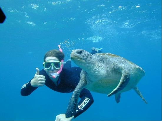 Byron Bay Dive Centre: Sea Turtle Snorkel Tours