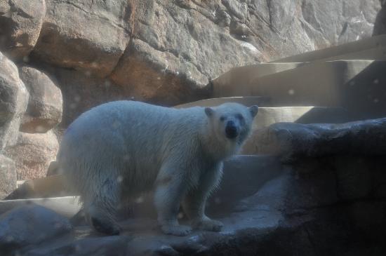 Nihondaira Zoo: 白熊