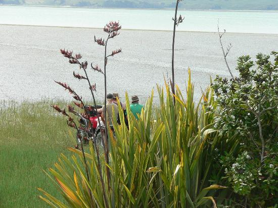 Kawhia Beachside S-Cape Holiday Park: Tui and other wild life visit often.