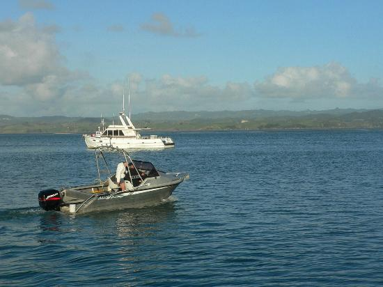 Kawhia Beachside S-Cape Holiday Park: Charter boat trips are available also.