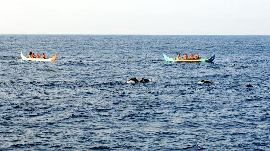 dolphin tour in Teluk Kiluan