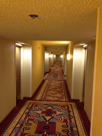 Charlotte Marriott City Center: The Hallways!! Nice.