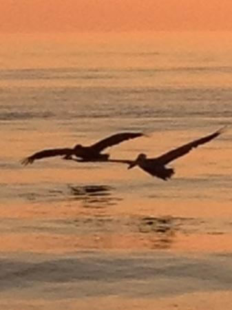 Hilton Marco Island Beach Resort: told these pelicans to wait... but they were having none of it