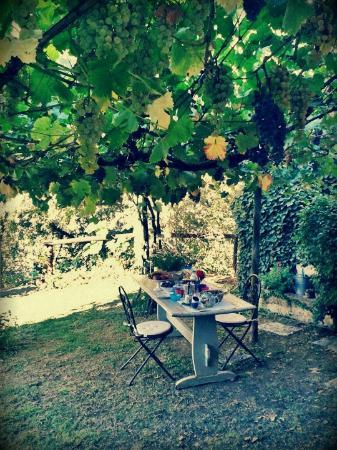 Da Alice: The grapes of the vine, over the breakfast in the garden