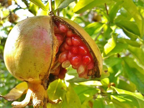 Da Alice: Pomegranates!