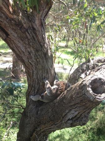 Koala Conservation Centre: relaxing