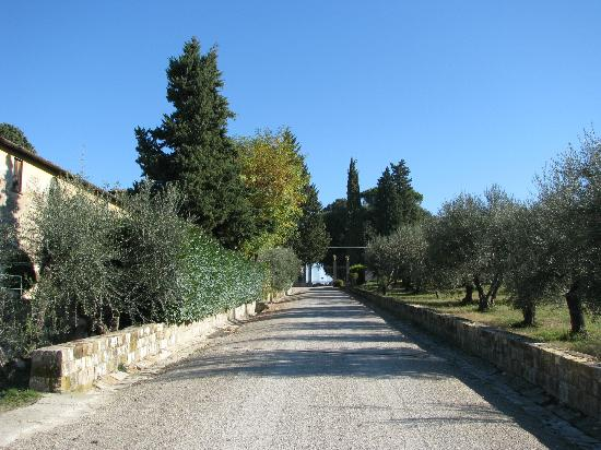 Villa Torre Rossa Apartments: The road to the olive grove