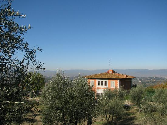 Villa Torre Rossa Apartments: View from the olive grove