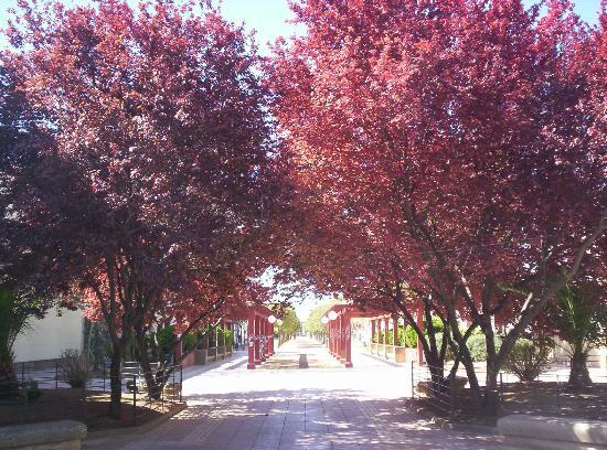 Hostal Donaire: Parque peatonal junto al hotel