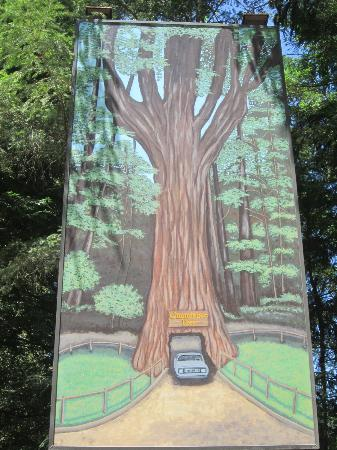 Chandelier Drive-Through Tree: Old School advertisement for the Chandelier Tree Park