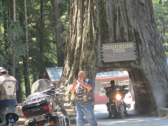 Chandelier Drive-Through Tree: Even tough looking bikers want their picture taken in the tree!