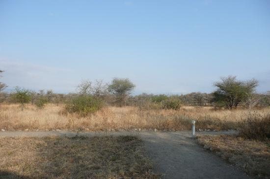 Whistling Thorn Tented Camp: In the middle of nowhere