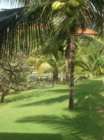 แพนดานุส รีสอร์ท & สปา: территория отеля