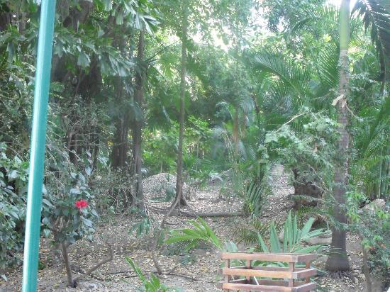 Las Brisas Huatulco: jardines