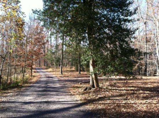 Westmoreland State Park: View of the woods and gravel road to cabin