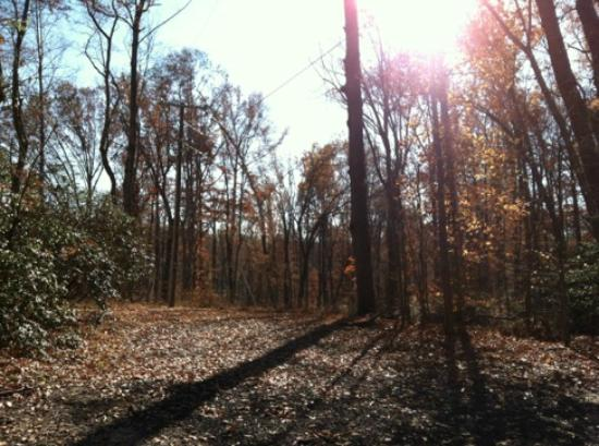 Westmoreland State Park: View of the woods near our cabin