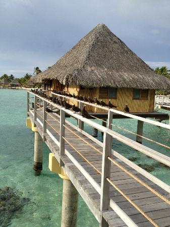InterContinental Bora Bora Le Moana Resort : over the water bungalow
