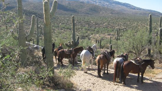 Tanque Verde Ranch: Breakfast parking