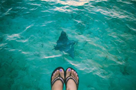 InterContinental Bora Bora Le Moana Resort: eagle ray? while watching the sunrise
