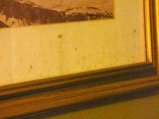 Casa Bella Resort: Mold Wall Picture