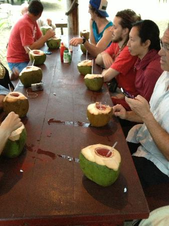 Swell Surf Camp: En La Boca trip - having drinks from fresh coconut
